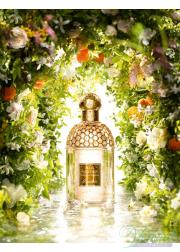 Guerlain Aqua Allegoria Nerolia Bianca EDT 75ml for Men and Women Unisex Fragrance